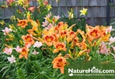 5 Plants That Are Hard To Kill