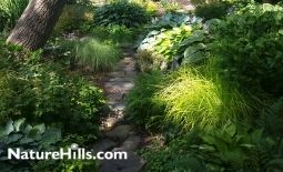 Pre-Planned Shade Garden Recipes for Success!