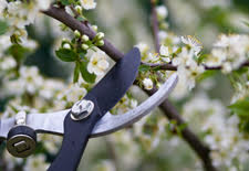 When to Prune Flowering Shrubs
