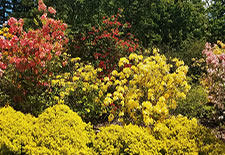 Flowering Shrubs to Punch Up Your Landscape