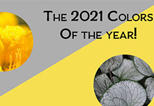 The Colors of the Year Used in all Things Gardening