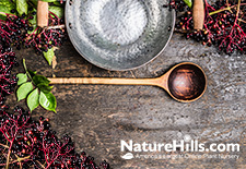 Elderberries: What's the Deal with America's New Favorite Plant?