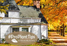 #ProPlantTips: The Maple Tree Root System