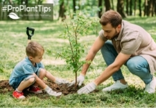 When Is The Best Time To Plant?