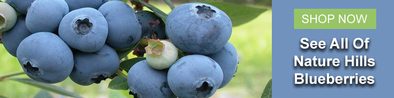 Shop all of Nature Hills Blueberries