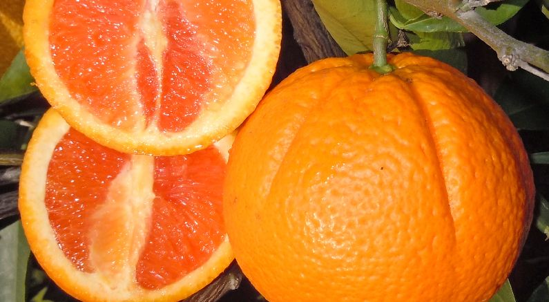 How to grow great tasting Cara Cara oranges