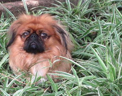 Dog In Ornamental Grass