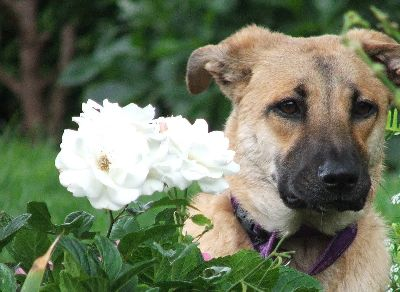 Roses are non-toxic to dogs and Nature Hills sells a wide variety of gorgeous roses