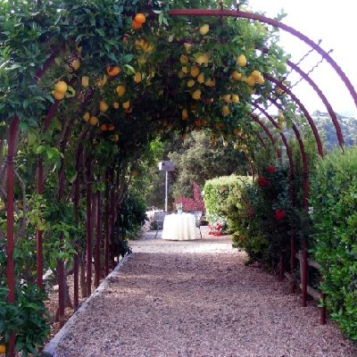 Citrus Trees from Nature Hills Can Be Trained to Grow as an Espalier or on a Trellis