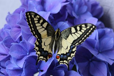 Beautiful butterflies and flowers in your front yard landscape