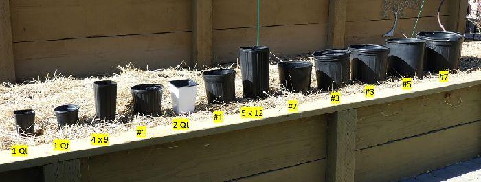 Nursery plant container size comparison