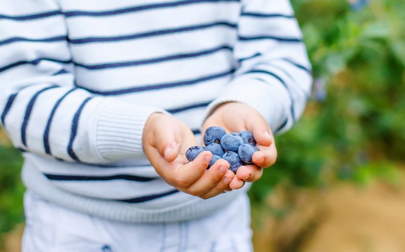 Grow healthy blueberries at home