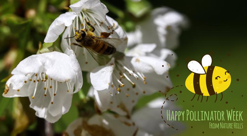 Nature Hills Pollinator Gardens