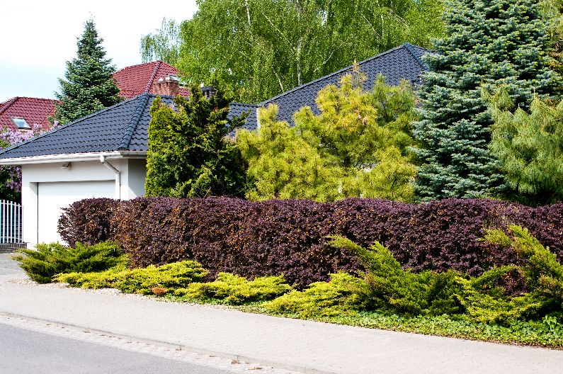 Create a beautiful sense of privacy with plants from Nature Hills