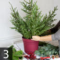 Step three creating outdoor winter container garden