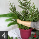 Step four creating outdoor winter container garden