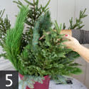 Step five creating outdoor winter container garden