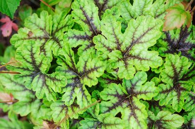 Foliage is important in a shade garden