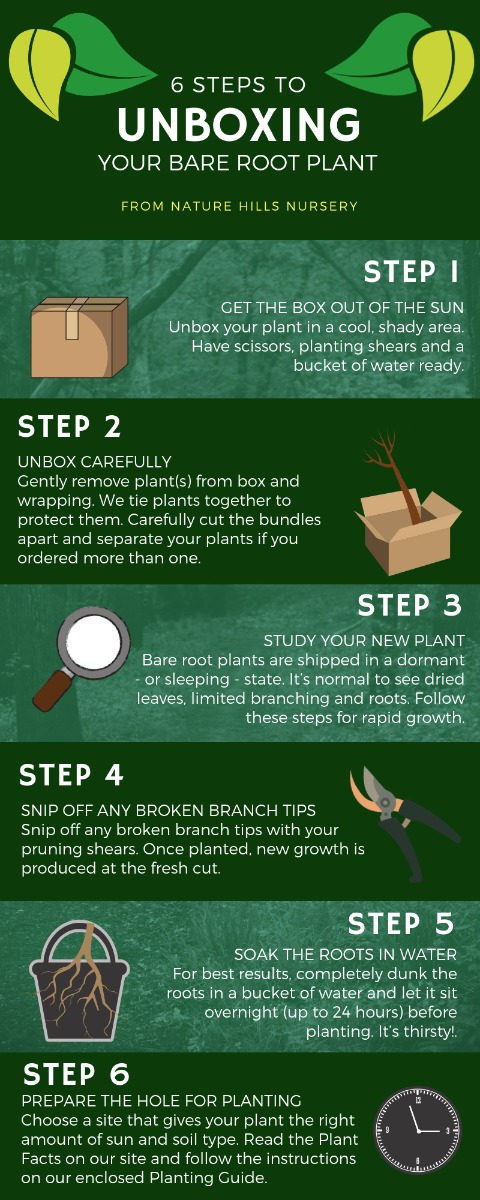 6 Steps to Unboxing Your New Bare Root Plant from Nature Hills Nursery