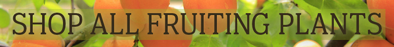 Shop All Fruiting Plants