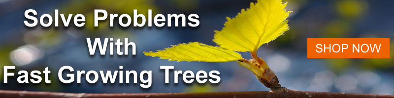 Shop Fast Growing Shade Trees from Nature Hills Nursery