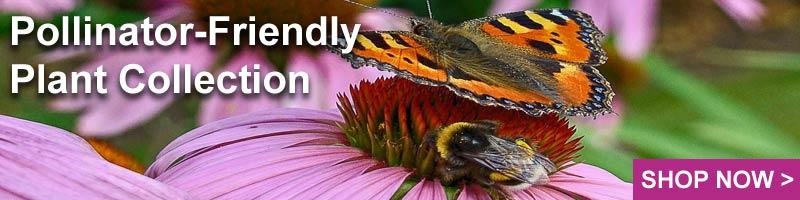 Nature Hills Pollinator-Friendly Plants