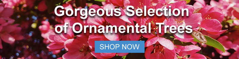 Shop Nature Hills Gorgeous Selection of Ornamental Trees