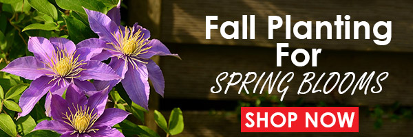 Shop Spring Blooms