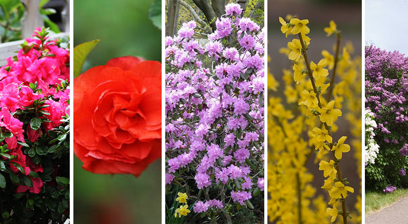 Early Spring Pruning Tips For Best Flowering