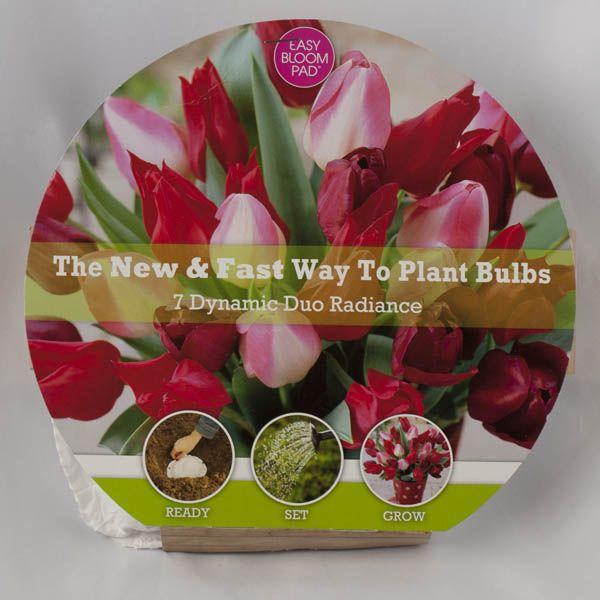 easy bloom pads