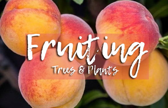 Fruit Trees and Plants