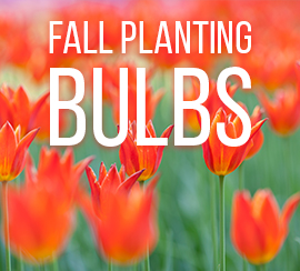 Fall Planted Flower Bulbs