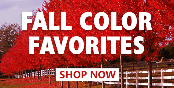 Fall color favorites