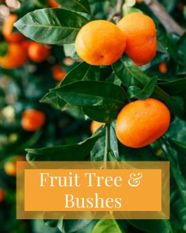 Fruit Tree & Bushes
