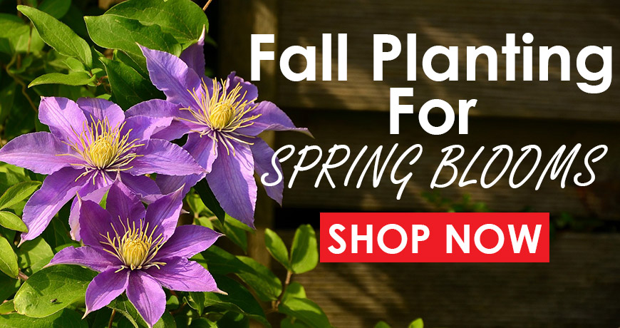 Fall Planting for Spring Blooms