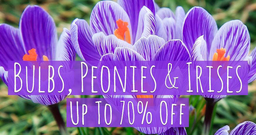 Bulbs Peonies Irises