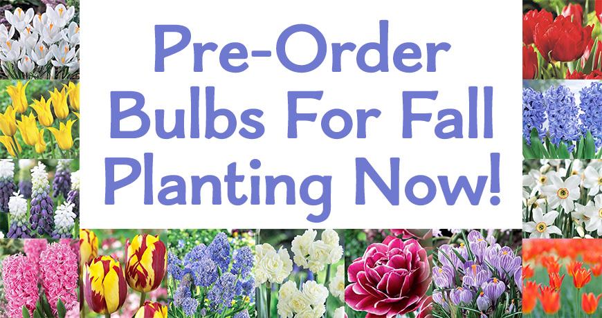 Bulbs, Peonies, Irises