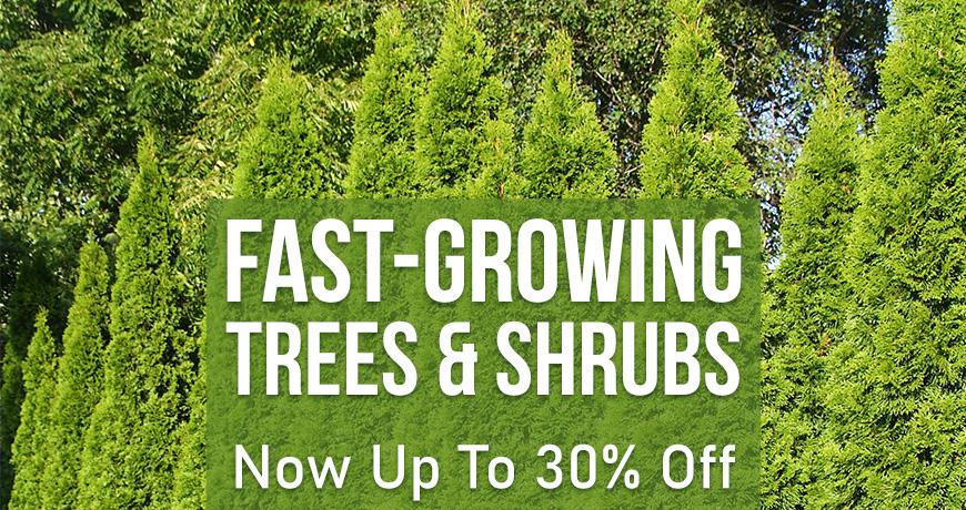 Fast Growing Trees N Shrubs