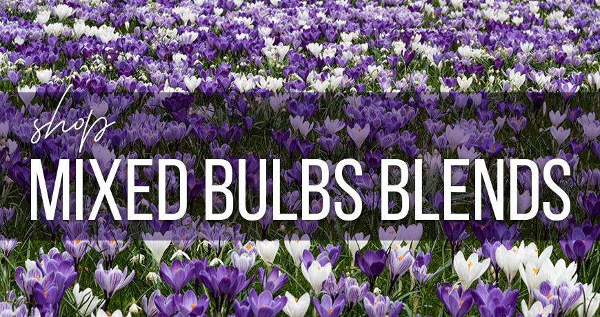 Mixed Bulb Blends