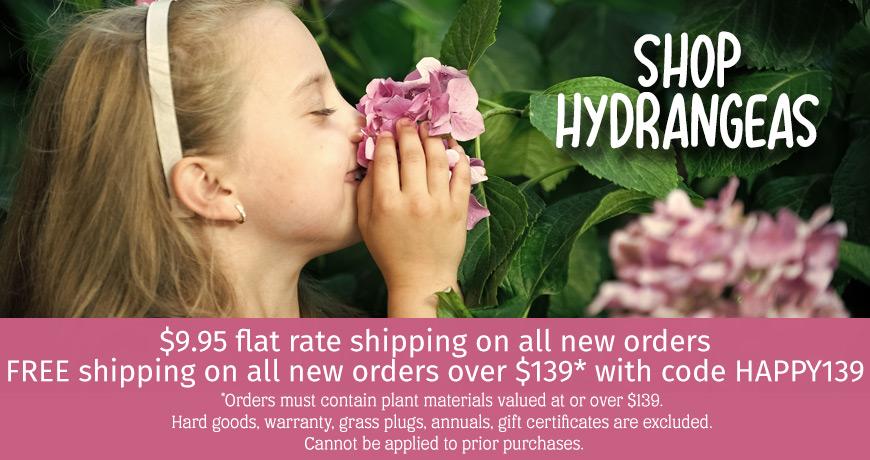 Shop Hydrangeas