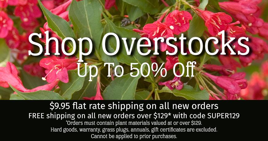 Shop Overstocks