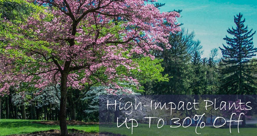 High Impact Plants
