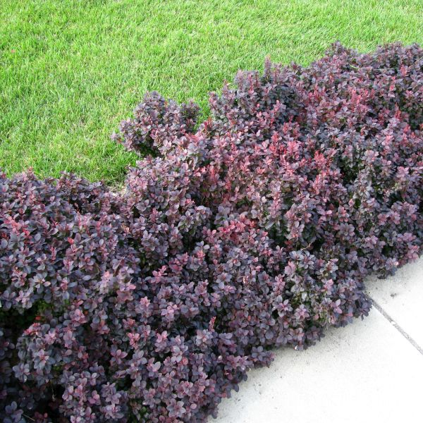 colorful shrubs