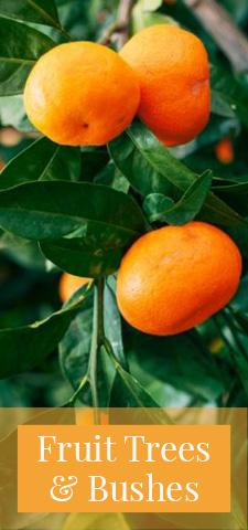 col - Fruit Trees & Bushes