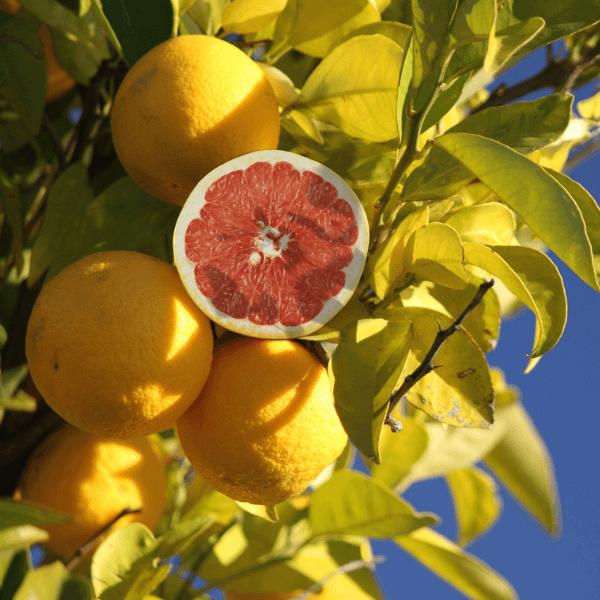 fruit trees & bushes