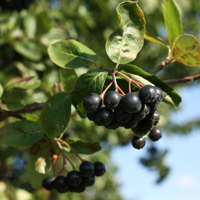 fruit plants just for you