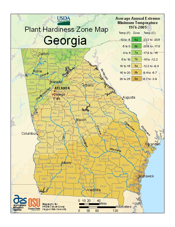 Georgia Trees Amp Shrubs Buy Online At Nature Hills Nursery