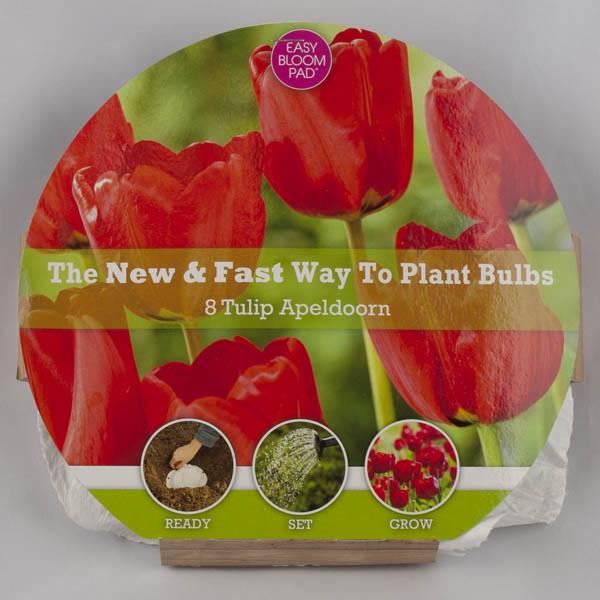 Apeldoorn Tulip Easy Bloom Pad