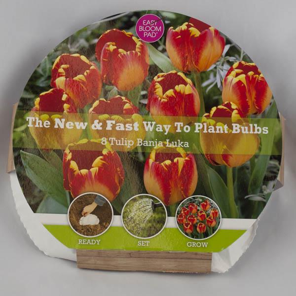 Banja Luka Tulip Easy Bloom Pad