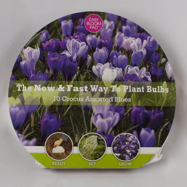 Mixed Blue Crocus Easy Bloom Pad